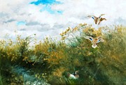 Ducks Paintings - Waterfowl by Pg Reproductions