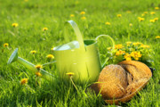Garden Flower Posters - Watering can in the grass Poster by Sandra Cunningham