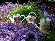 Searcy Prints - Watering cans and Campanula Print by Tanya  Searcy