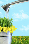 Beautiful Day Posters - Watering flowers and grass for spring Poster by Sandra Cunningham