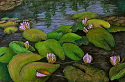 Stein Paintings - Waterlilies by Carla Stein