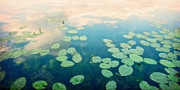 Dreamy Photos - Waterlilies Home by Priska Wettstein