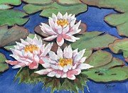 Waterlily Art - Waterlilies by Marsha Elliott
