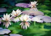 Michael  Pearson - Waterlilies