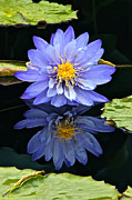 Byron Varvarigos Posters - Waterlily And Reflection Poster by Byron Varvarigos