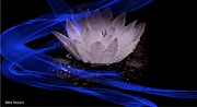 Vision Mixed Media - Waterlily Blue Ribbon by Debra     Vatalaro