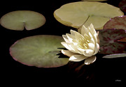 Waterscape Digital Art - Waterlily I by Linda  Parker