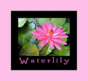 Waterlily Poster Posters - Waterlily Poster by Jo Claire Hall