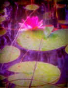 Waterlily Prints - Waterlily Print by Mimulux patricia no
