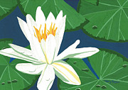 White Waterlily Paintings - Waterlily by Terry Taylor