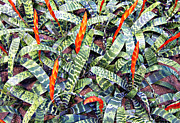 Bromeliads Glass - Watermelon Leaves by Douglas Barnard
