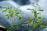 Riffle Art - Waterscapes - Lilac blossom by Andy-Kim Moeller