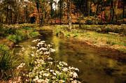 Tamyra Ayles - Waterside Flowers
