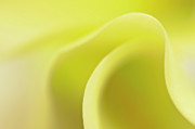 Calla Lily Photos - Wave a Little Light by Evelina Kremsdorf