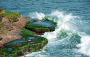 Whitewater Prints - Waves of La Jolla Print by Sandra Bronstein