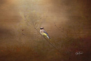 Waxwing Spring Visit Print by Cris Hayes