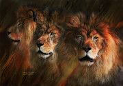 African Lion Art Framed Prints - Way Of The Lion Framed Print by Carol Cavalaris