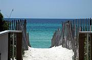 Beaches In Florida Prints - Way to the beach Print by Susanne Van Hulst