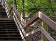 Indiana Dunes Photos - Way Up by Ann Horn