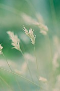 Wayside Photos - Wayside grass - colour by Hideaki Sakurai