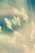 Wayside Photos - Wayside grass - light by Hideaki Sakurai