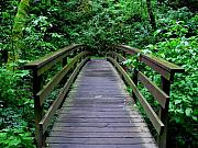Green Forest Photos - We All Have Bridges To Cross by PJ  Cloud