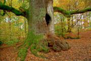 Big Tree Photos - We are here since 1000 years 2 by Heiko Koehrer-Wagner