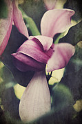 Petals Digital Art Framed Prints - We Knew What Had To Be Framed Print by Laurie Search
