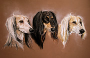 Saluki Framed Prints - We Three Salukis Framed Print by Caroline Collinson