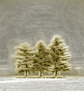 Snowy Trees Digital Art - We Three Trees by Bill Tiepelman