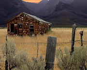 Old Cabins Prints - Weathered and Worn Print by Lydia Warner Miller