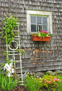Spring Scenes Posters - Weathered Maine Seacoast Barn Poster by Thomas Schoeller