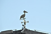 Weathervane Prints - Weathervane - Pelican Print by Wayne Sheeler