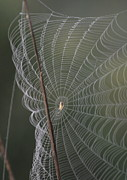 Arachnids Prints - Web In The Wind Print by Christopher Kirby