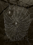 Arachnid Framed Prints - Web Master Framed Print by Ron Jones