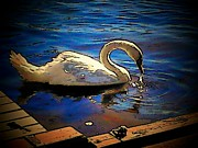 Cell Phone Prints - Webster Swan  Print by Michael L Kimble