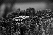 Pine Needles Photos - Wedding Bands on Stump by Douglas Barnett
