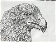 Wedgetail Prints - Wedgetail Eagle Print by Leonie Bell