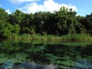Country Scenes Photo Originals - Weeki Wachee River by Barbara Bowen