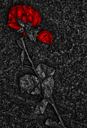 Street Photographer Photographs Prints - Weep Of A Rose  Print by Jerry Cordeiro