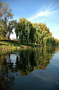 Evening Scenes Photos - Weepin Willows Frankenmuth Cass River by LeeAnn McLaneGoetz McLaneGoetzStudioLLCcom