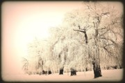 Snow Scene Art - Weeping 3 by Julie Lueders