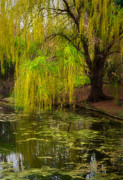 Floral Gardens Prints - Weeping Pond Print by Fred Lassmann