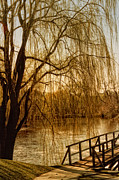 Barbara Middleton Metal Prints - Weeping Willow and Bridge Metal Print by Barbara Middleton