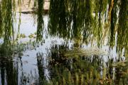 Weeping Willow Photos - Weeping Willow As Above So Below by Holly Ethan