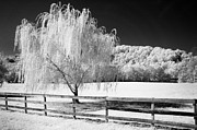 Infrared Framed Prints - Weeping Willow Framed Print by Paul W Faust -  Impressions of Light