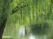 Tina M Wenger - Weeping willow