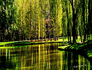 Garden Scene Digital Art Posters - Weeping Willow Tree on Lakeside Poster by Carol F Austin