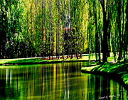 Willow Lake Digital Art Posters - Weeping Willow Tree Reflective Moments Poster by Carol F Austin