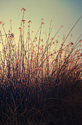Reeds Prints - Weightless Print by Laurie Search